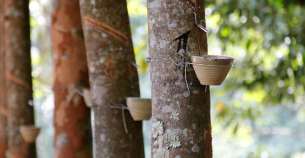 Expertise als Dienstleistung – Timberfarm GmbH
