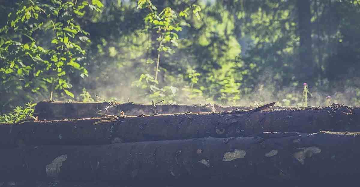 Holzernte-Beschränkung sorgt für Irritationen bei den deutschen Forstunternehmen