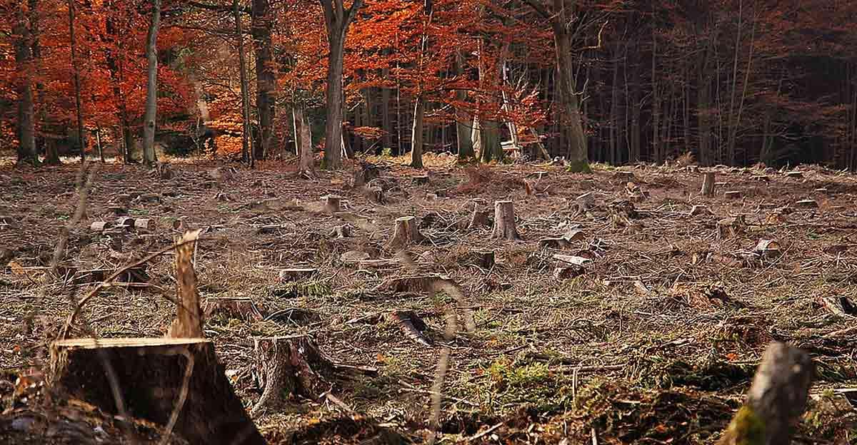Totholz als Herausforderung für die Holzwirtschaft